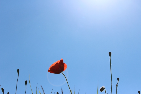 Poppy's & Sunshine